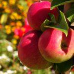 apple-1621631_1920